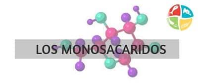 los monosacáridos